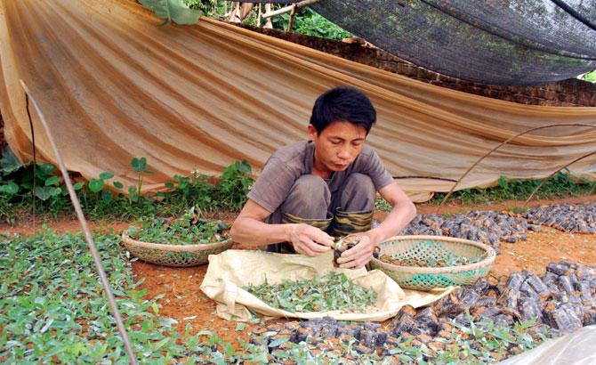 Khó quản lý, nhiều hệ lụy từ gieo ươm giống cây lâm nghiệp tự phát